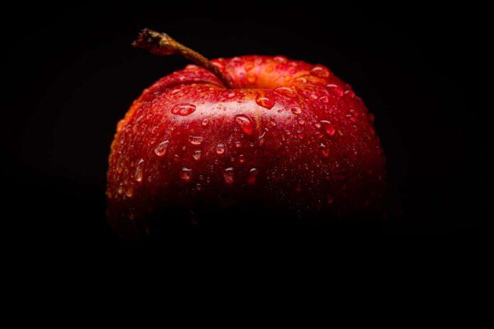 jabłko dla psa